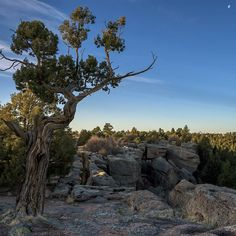 Sunrise on the rim of Castlewood Canyon. Look closely  and you can see Pikes Peak on the horizon. . . . . . #coloradountamed #visitcolorado #castlewoodcanyon #landscapes #naturephotography #outdoorsociety #wanderlust