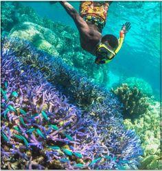 天国に一番近い珊瑚礁!神秘の島「ニューカレドニア」に行ってみない? | RETRIP[リトリップ]