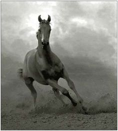 Arabian Horse.  Love how wild and free this picture is!