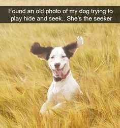 As Good As It Gets: 17 Very Funny Dog Memes - World's largest collection of cat memes and other animals Animals And Pets, Baby Animals, Funny Animals, Cute Animals, Nature Animals, Wild Animals, Funny Animal Clips, Animal Memes, Dog Quotes Funny