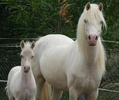 OMG ponies!!