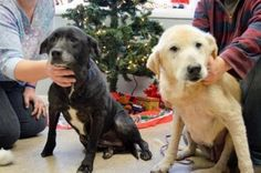 Neglected senior dogs rescued, adopted and then returned to shelter