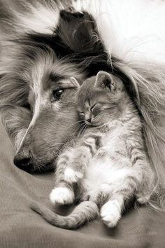 ♂ Black & white photo Cozy dog and cat together