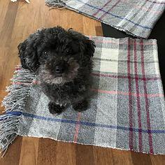 Ravelry: yancka's Plaid Blanket Plaid Blanket, Ravelry, Hand Weaving, Mad, Dogs, Animals, Hand Knitting, Animales, Animaux