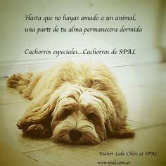 Cachorros de SPAL