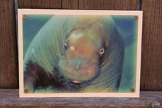 Walrus Blank Note Card Animal Photography by HBBeanstalk on Etsy, $3.00