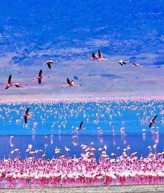 Flamingos on Lake Nakuru,Kenya
