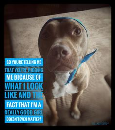 Life of a pitbull 😢 Funny Animal Pictures, Cute Funny Animals, Save Animals, Animals And Pets, Beautiful Dogs, Animals Beautiful, Cute Pitbulls, Nanny Dog, Dog Rules