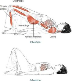 This is why we shoulderbridge. #Pilates
