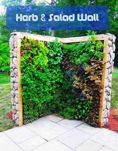 """Gardening Herbs vertical """"herb and salad wall"""" - hang from garage eaves above outdoor table to make space in raised beds - Plain and boring backyard design is unappealing Dream Garden, Garden Art, Garden Design, Fence Design, Herb Wall, Edible Garden, Garden Projects, Garden Ideas, Garden Inspiration"""