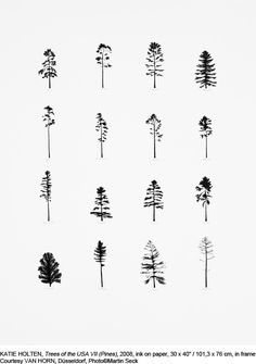 KATIE HOLTEN, Trees of the USA VII (Pines), 2008, ink on paper, 101,3 x 76 cm…