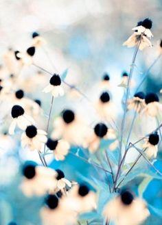 Secret Garden by lina.sproge