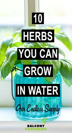 10 Herbs You Can Grow Indoors in Water All Year Long For Endless Supply#endless #grow #herbs #indoors #long #supply #water #year Diy Herb Garden, Herb Garden Design, Veg Garden, Garden Ideas, Garden Art, Sage Plant, Types Of Herbs, Herbs Indoors, Succulent Terrarium