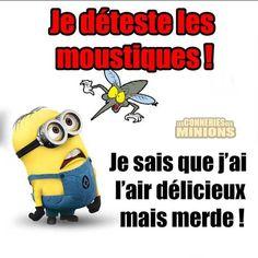 """I hate bugs ! I know I seem delicious but shiiit !"" **Excusez-moi pour le retard** #follow4follow #souteneznous #les_minions2 #picoftheday"