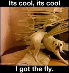 funny dogs, i got the fly