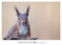 Voor de fotohut in Clinge komen zeker in de ochtend verschillende eekhoorntjes. Deze is wel erg leuk :) Fijn weekend!
