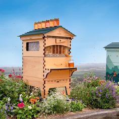 Hive Stand, Harvesting Honey, Beekeeping For Beginners, Beat The Heat, Bee Keeping, Survival Guide, Beehive, Flow, Backyard