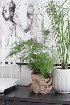 Green plants, bamboo like the contrast of the white wall and the green plants and the brown bag :-)
