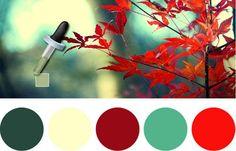 A escolha da paletas de cores para seu site