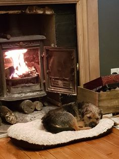 Border Terrier by the fire. Animals And Pets, Baby Animals, Cute Animals, Best Dog Breeds, Best Dogs, Dog Day Afternoon, Cute Borders, Brown Dog, Dogs And Puppies