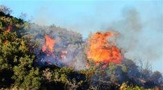 ΤΩΡΑ- Δασική πυρκαγιά στη Θεσσαλονίκη