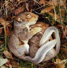 Sincaplar eşlerine sarılmadan uyuyamazlar ;