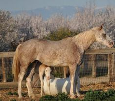 Ranch! Winchester Shotgun, Horses For Sale, Palomino, Animals, Ranch, Guest Ranch, Animales, Animaux, Animal