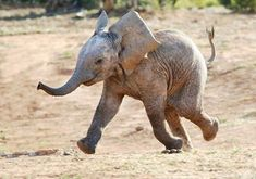 Happy Elephant :)
