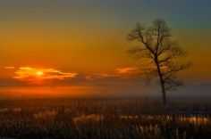 Missouri Sunrise, as I set and watch the sun come up this morning as it peek threw the tree with a bring shimer. There little leaves are turn a lovely yellow and org color it beautiful morning and I enjoy it as I drink my morning coffee,mm Good Morning...to the sunshine.