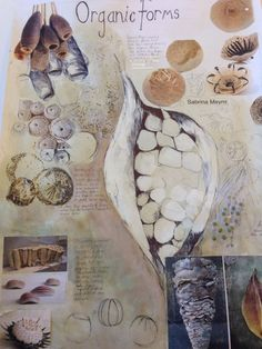 Mature presentation but more depth of research needed for AS level A Level Art Sketchbook, Sketchbook Layout, Textiles Sketchbook, Artist Sketchbook, Sketchbook Ideas, Kunstjournal Inspiration, Sketchbook Inspiration, Natural Form Art, Observational Drawing