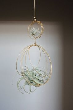 Air Plant Terrarium Kit And Stained Glass Inspiration Xerographica Tillandsia Ornament Air plant Holder Air Plant Display, Diy Plant Stand, Plant Stands, Small Plants, Indoor Plants, Indoor Herbs, Indoor Gardening, Casa Hipster, Plant Crafts