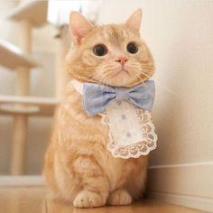 land-like-a-cat: Formal kitty {Courtesy of @pooh0403} #meowbox #pretty #prettylittleliars