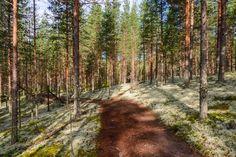 Rokua 7.8.2016 -62 Finland, Country Roads, Nature, Naturaleza, Scenery