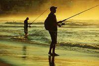 Best Surf Rods