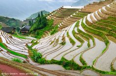 Longji Rice Terrace Fields, Longsheng, Guangxi, China