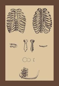 Andreas Vesalius (31 December 1514-October 1564) was an anatomist, physician, and author of one of the most influential books on human anatomy, De humani corporis fabrica (On the Fabric of the Human B
