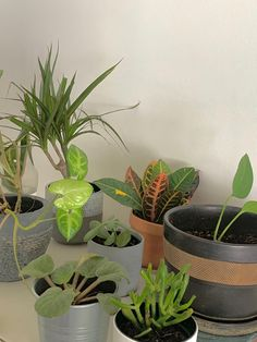 Plant Aesthetic, Aesthetic Room Decor, Room With Plants, Plants Are Friends, Bedroom Plants, Dream Rooms, Plant Decor, Houseplants, Indoor Plants