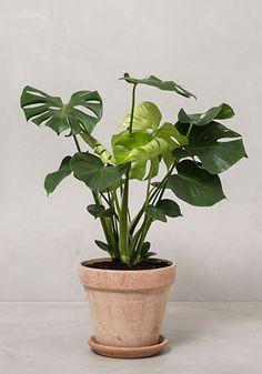 Her er de 10 mest trendy planter lige nu Plant Leaves, Planters, Tips, Plant, Window Boxes, Pot Holders, Flower Planters, Pots, Counseling