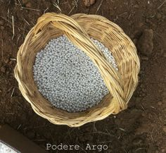 Semina #fagioli #bio del Purgatorio #organic #beans #maremma #tuscany Wicker Baskets, Tuscany, Beans, Coconut, Argo, Organic, Fruit, Italy, Italia