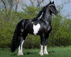 This is one regal looking horse