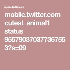 mobile.twitter.com cutest_animal1 status 955790370377367553?s=09
