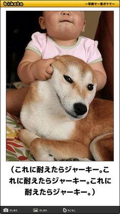 (これに耐えたらジャーキー。これに耐えたらジャーキー。これに耐えたらジャーキー。) Cute Baby Animals, Animals And Pets, Funny Animals, Funny Images, Funny Pictures, 15 Dogs, Japanese Dogs, Animal Jam, Warrior Cats