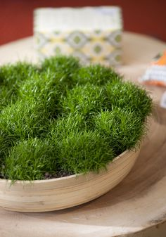 Irish moss in a bowl for indoors.♡ this . Parents had this planted all over our walkway.