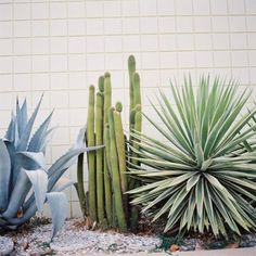 euphorbias cacti and succulents all marry happily in a drought-resistant garden landscape