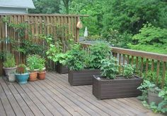 On Deck Vegetable Garden-tips and tricks.