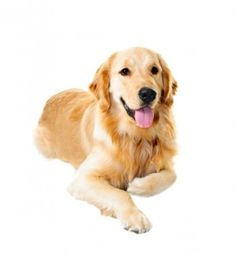 Breed of the Week on Pinterest   Pharmacy, Pets and Blog
