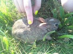 Bunny left behind...
