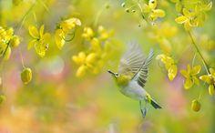 Счастливый садовник, FuYi Chen