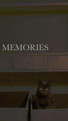 ♦ memories