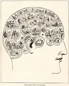 """A typical 19th century phrenology chart: In the 1820s, phrenologists claimed the mind was located in areas of the brain, and were attacked for doubting that mind came from the nonmaterial soul. Their idea of reading """"bumps"""" in the skull to predict personality traits was later discredited. Phrenology was first called a pseudoscience in 1843 and continues to be considered so."""